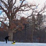 snow + sleds.