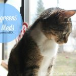 Medications for Pets: Walgreens Pet Meds
