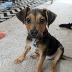Meet Ted.