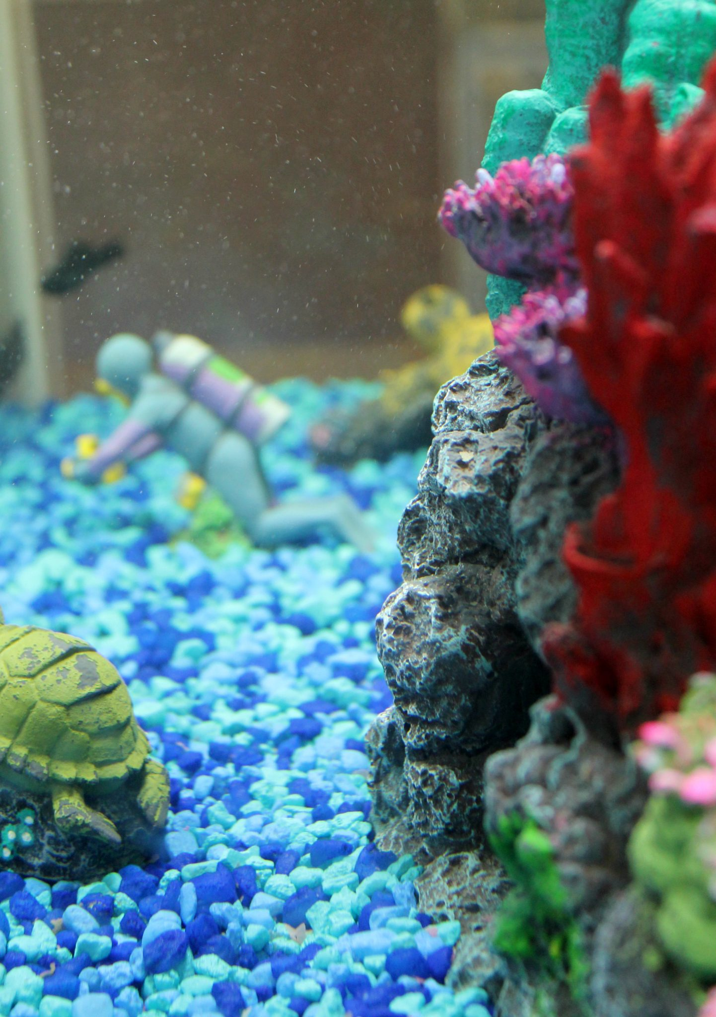 PetSmart Fish: Why our home will always have fish!
