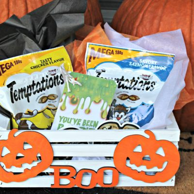 How to Make a Halloween BOO kit for Cats!