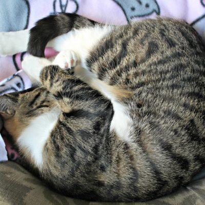 DIY Pet Blanket (under $5)