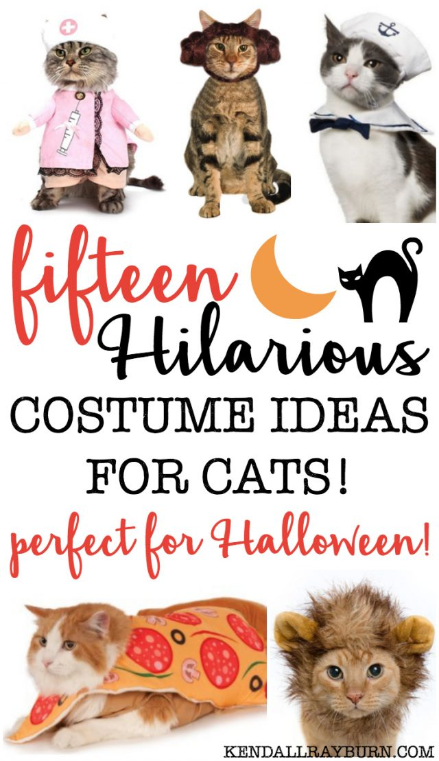 20 HILARIOUS Halloween Costumes for Cats