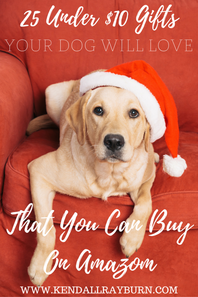 25 Under $10 Gifts for Your Dog on Amazon!