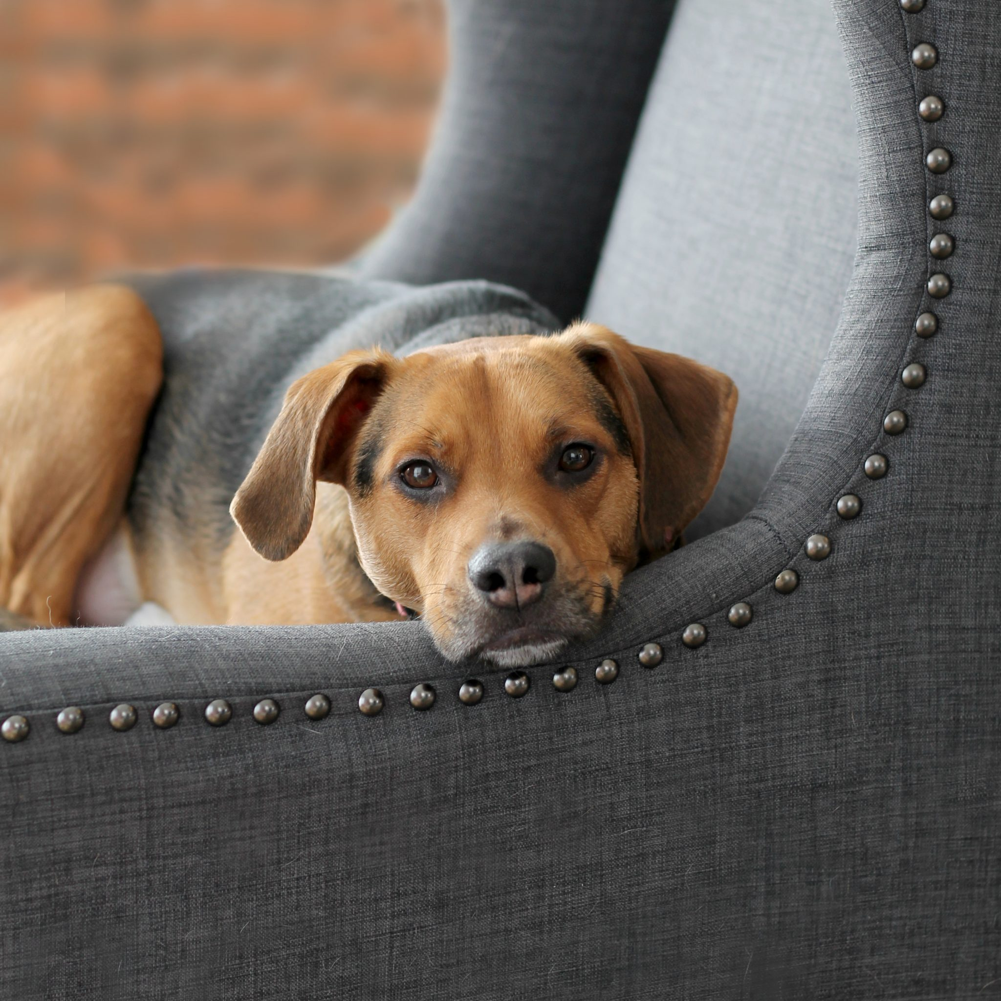5 Ways to Spend Quality Time with Your Dog