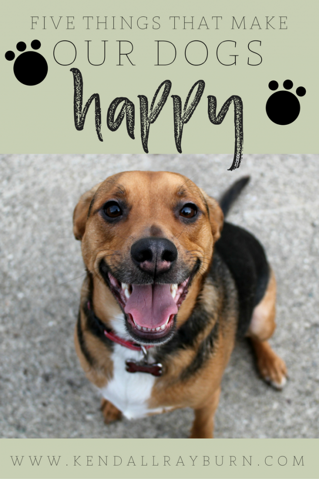 5 Things that Make Our Dogs Happy