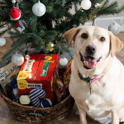 How to Assemble the Perfect Present for Your Pup