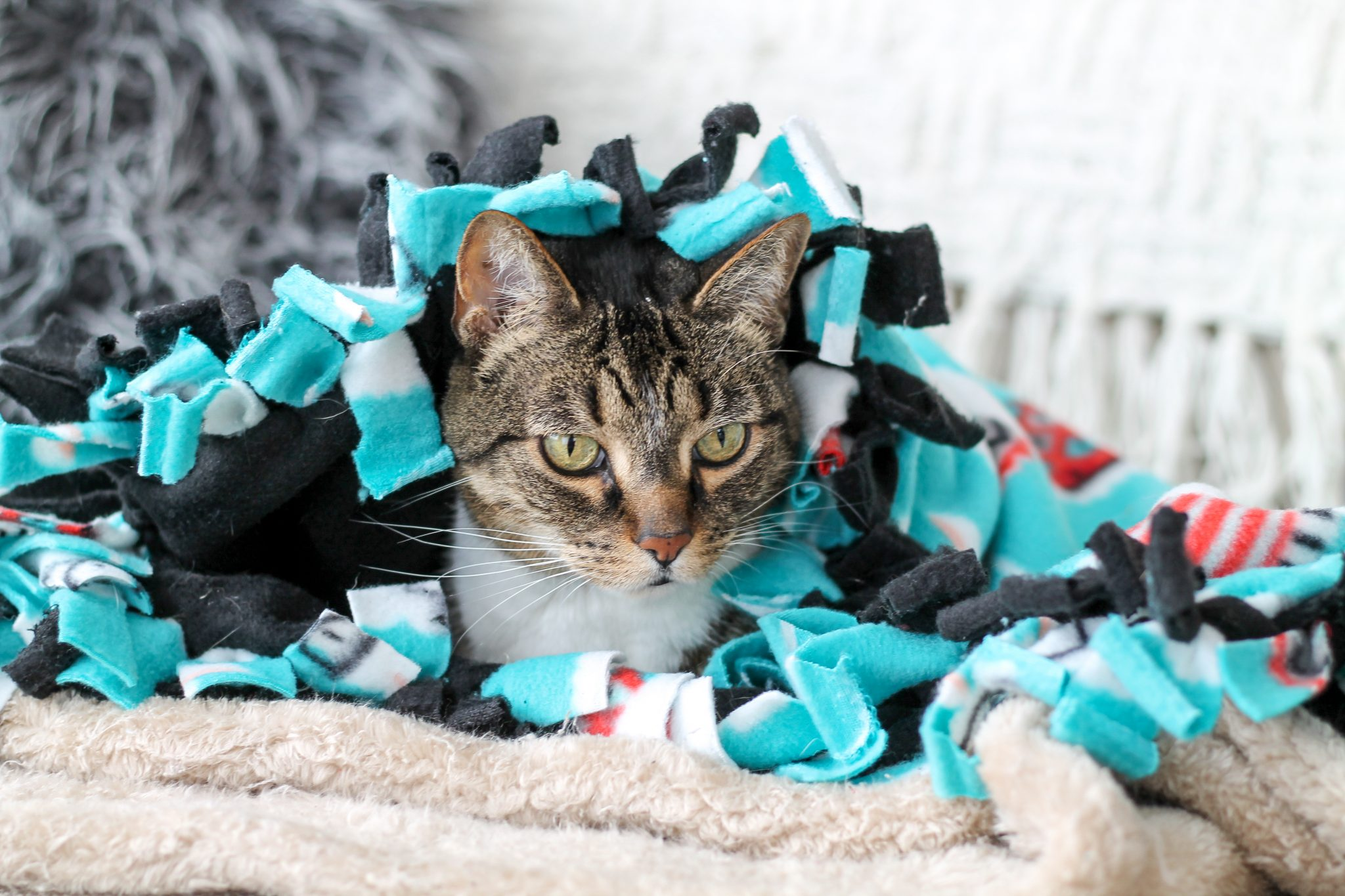 DIY Cat Blanket