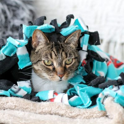 5 Fun Ways to Pamper Your Cats