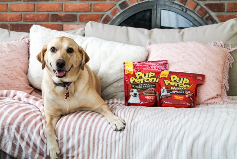 Best Treats for Dogs: Treating the Pups to Pup-Peroni®