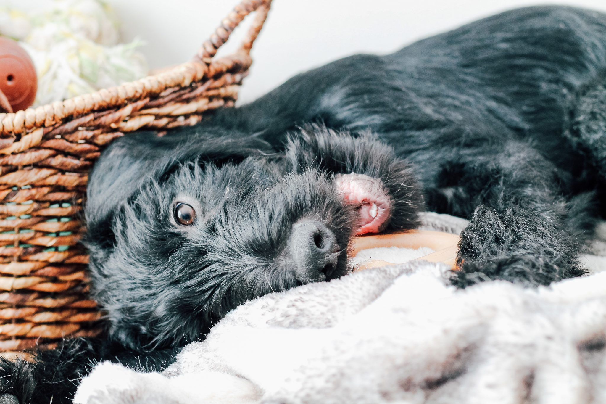 How to Create the Ultimate Puppy Clean-Up Kit