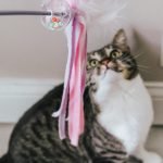 Tips for Caring for Multiple Cats