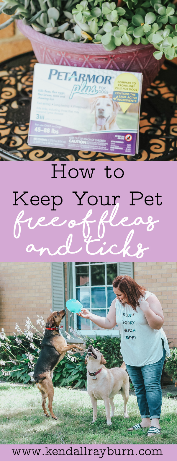 How to Keep Your Pet Free of Fleas and Ticks