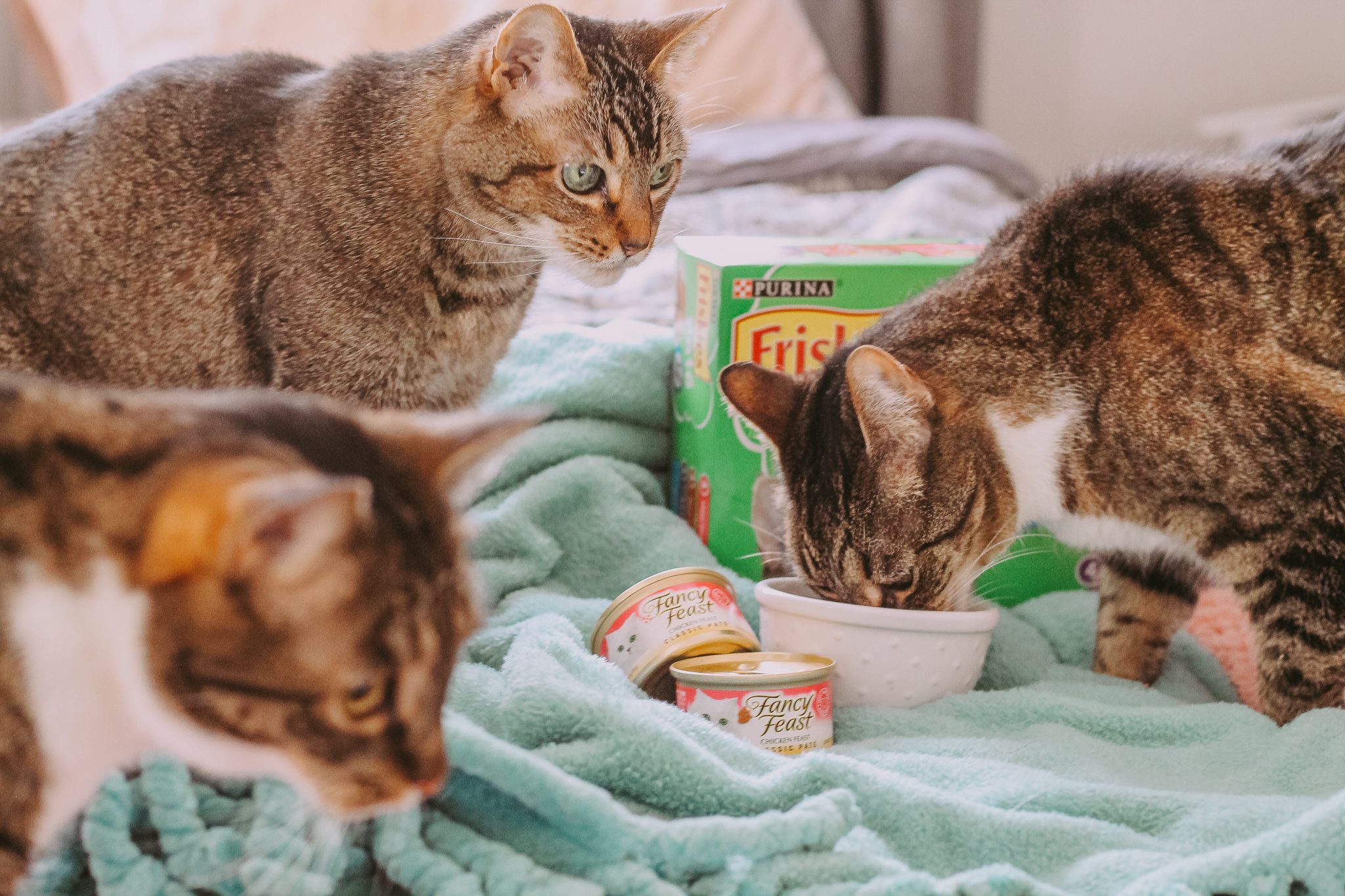 What We Feed Our Three Cats