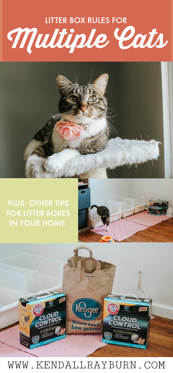 Litter Box Rules for Multiple Cats
