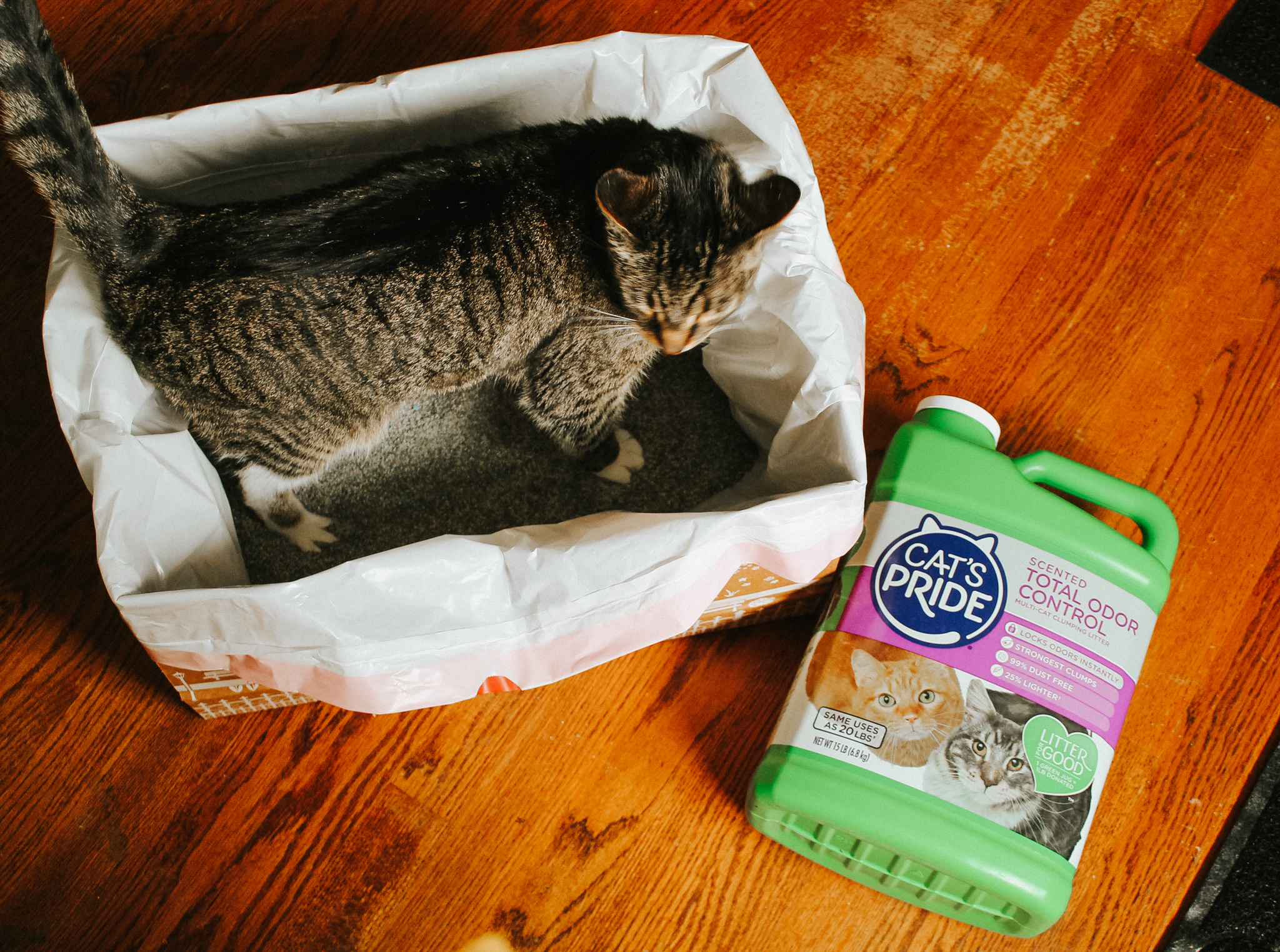 Our Kitty Adoption Stories & Giving Back to Shelter Pets